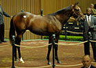 Medaglia d'Oro Filly Brings $1.3 Million