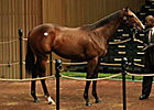 Malibu Moon Filly Brings $700,000