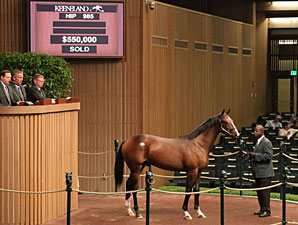 $550,000 Smart Strike Colt Leads Session