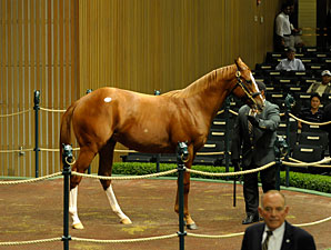 Kellys Buy Tapit Colt for $650,000