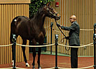 Giant&#39;s Causeway Colt Tops Early at Keeneland