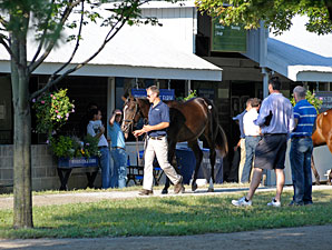 Keeneland September Sale Resilient So Far