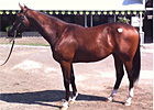Keeneland September - Hip 523 by Medaglia d'Oro