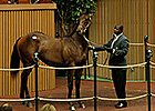 Coolmore Gets War Front Colt for $1 Million