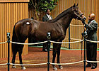 Keeneland September: Hip 712 in the Sale Ring