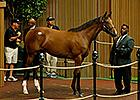 Keeneland September - Hip 80 Sale Ring Bidding