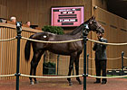Keeneland September: Hip 846 in the Sale Ring