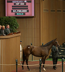 Half to Havre de Grace Sells for $1.7 Million