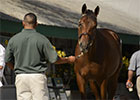 Keeneland September Sale 2013 Preview