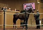 Sheikh Mohammed Lands $1.2M Bernardini Filly
