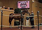 Keeneland September Sale: Day 4 Wrap