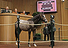 Tapit Colt Goes for $2.2M to Co-Top Day 4