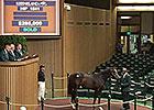 Harlan's Holiday Colt Brings $285,000