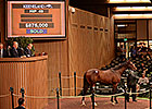 Medaglia d'Oro Colt to Ferguson for $875,000