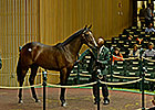 War Front Filly Brings $1M at Keeneland