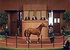 Keeneland September Sale Wrap - Day 1