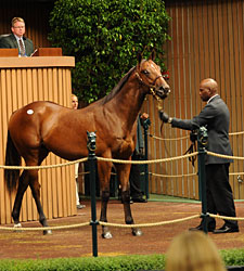 Slam Dunk: Shultz Sells $1 Million Yearling