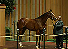 Beholder's Half Sister Brings $1.1 Million