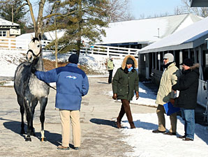 Keeneland January Sale: Mood Is Upbeat