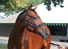 Keeneland September Sale 2013: Day 3 Wrap-Up