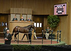 Keeneland September Sale 2013 Final Wrap-Up