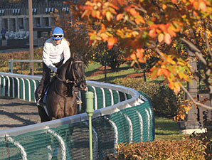 Keeneland's 'FallStars Weekend' Taking Shape