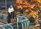 Keeneland&#39;s &#39;FallStars Weekend&#39; Taking Shape