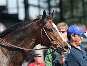 Keertana wins the 2011 Bewitch.