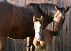 Full Brother to Frankel Foaled