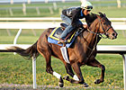 King Congie Puts in Final Blue Grass Work