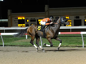 King Henry wins the 2013 Penn Dash Stakes.