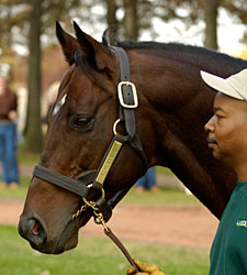 Standout Stallion Kingmambo Pensioned