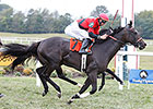 Kentucky Downs Posts Record Handle, Purses