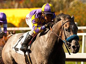 Kobe's Back wins the 2013 Willard L. Proctor Memorial Stakes.