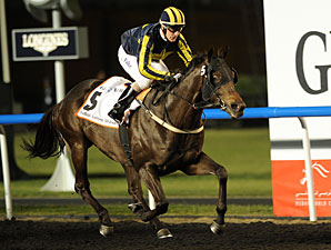 Krypton Factor Heads Al Shindagha Sprint