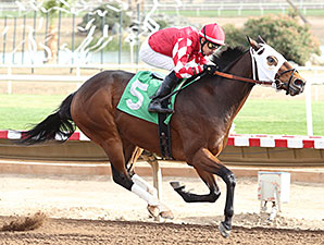 L. A. Weekend wins the 2013 Caballos Del Sol Stakes.