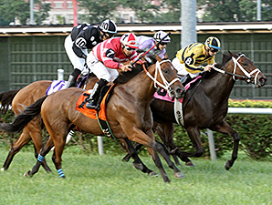 La Malaguena wins the 2014 Firecracker Stakes.