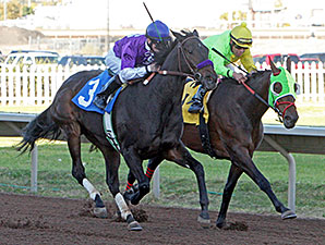 Lady Contender wins the 2014 Albuquerque Distaff.