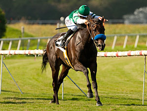 Lady of Shamrock Hopes to Shine in New York