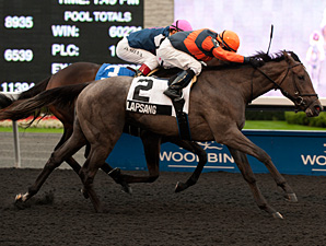 Lapsang wins the 2013 Deputy Jane West Stakes.