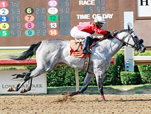Lasting Bubbles wins the 2013 Valor Farm Stakes.