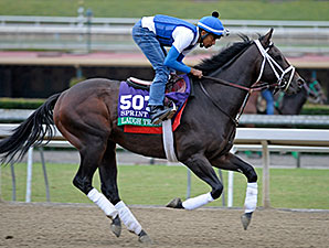 Laugh Track preps for the Breeders' Cup.