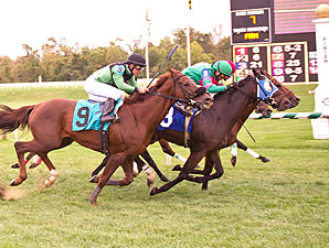 A Double Dead Heat at Laurel Park. Masterel, Rockaby Bay 1st and Colonel Bill, Elkhorn Creek 3rd.