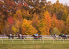 'Win and You're In' Races Added at Laurel