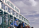 Laurel Park to Cluster Stakes for Fall Meet
