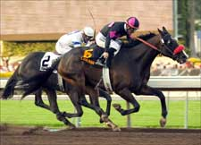 Lava Man to Stay Home for Gold Rush Turf Race