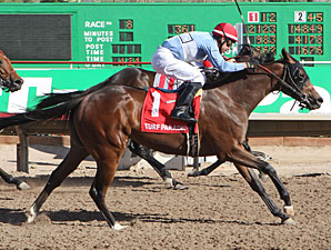 Lazy Daisy May wins the 2013 ATBA Spring Sales Stakes.