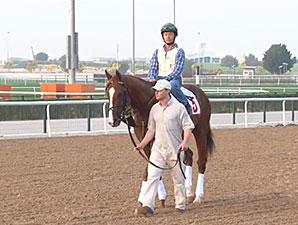 Dubai World Cup Horses at Meydan March 24