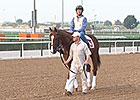 Dubai World Cup 2015 - Horses at Meydan March 24