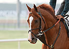 Woodbine Mile a Chance for New Star to Shine